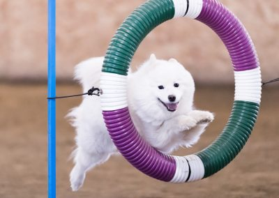 Dog & Owner
