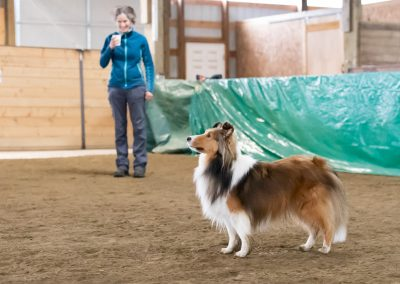 Dash Sheltie & Michelle Kinkade